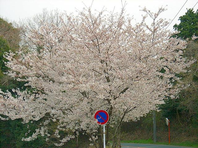 2006-Spring097.jpg