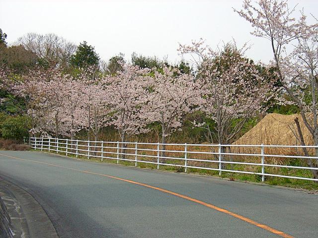 2006-Spring099.jpg