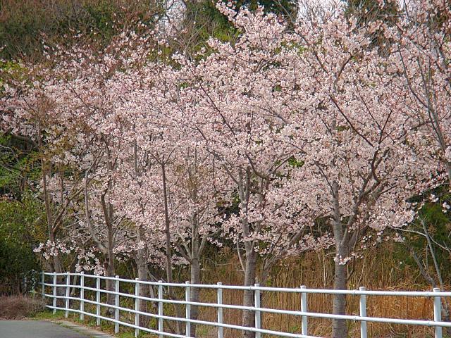 2006-Spring100.jpg