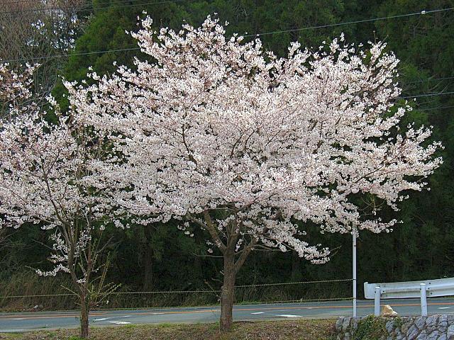 2006-Spring101.jpg