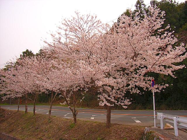 2006-Spring102.jpg