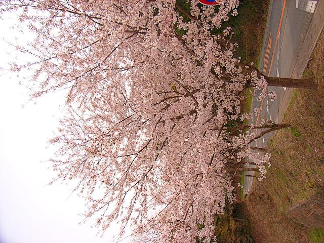 2006-Spring103.jpg