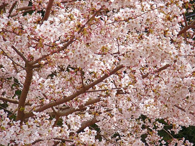 2006-Spring104.jpg