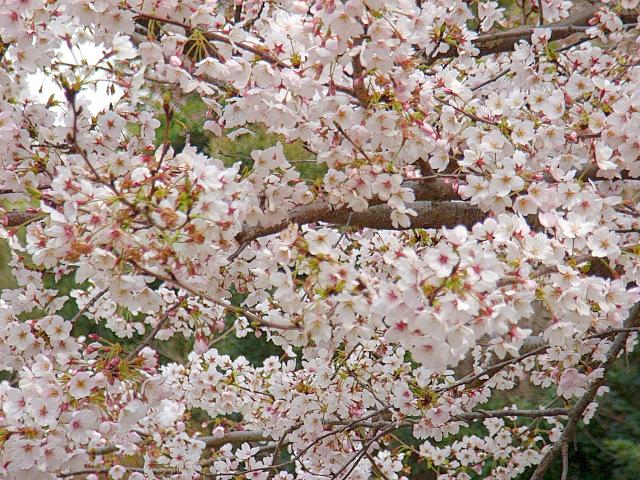 2006-Spring105.jpg
