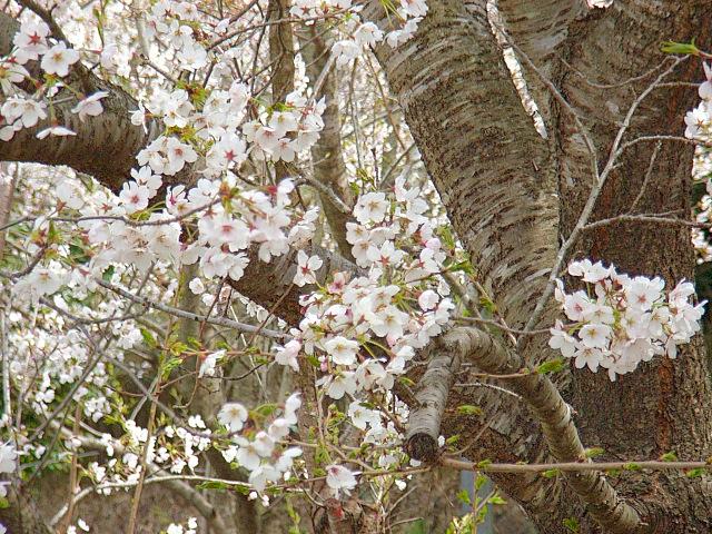 2006-Spring106.jpg