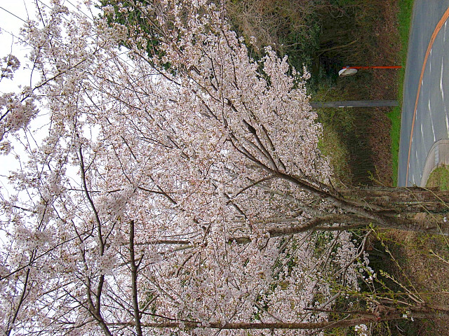2006-Spring107.jpg