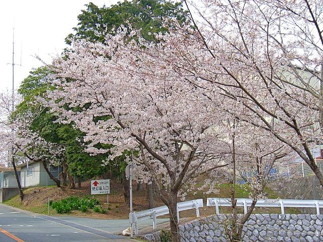 2006-Spring108.jpg