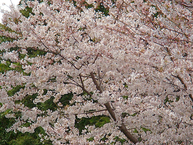2006-Spring109.jpg