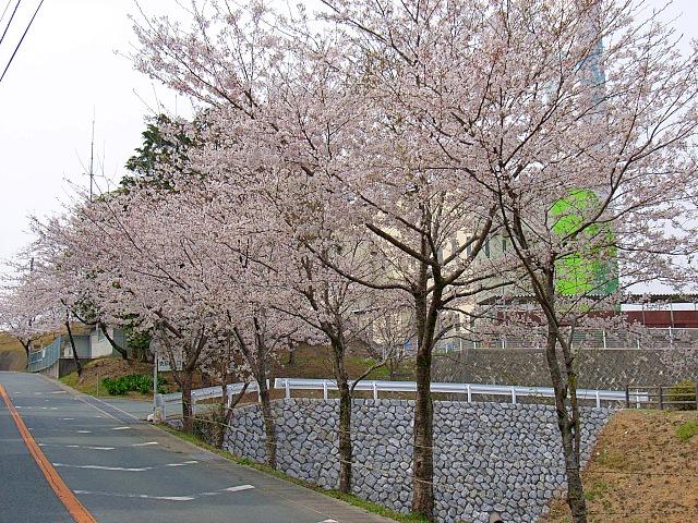 2006-Spring110.jpg