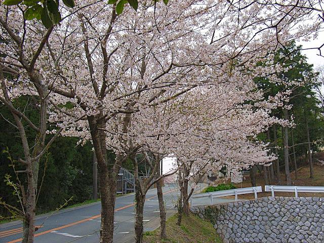 2006-Spring111.jpg