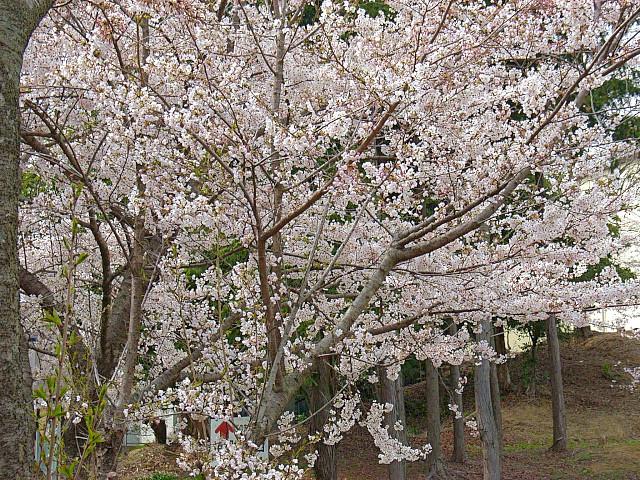 2006-Spring112.jpg