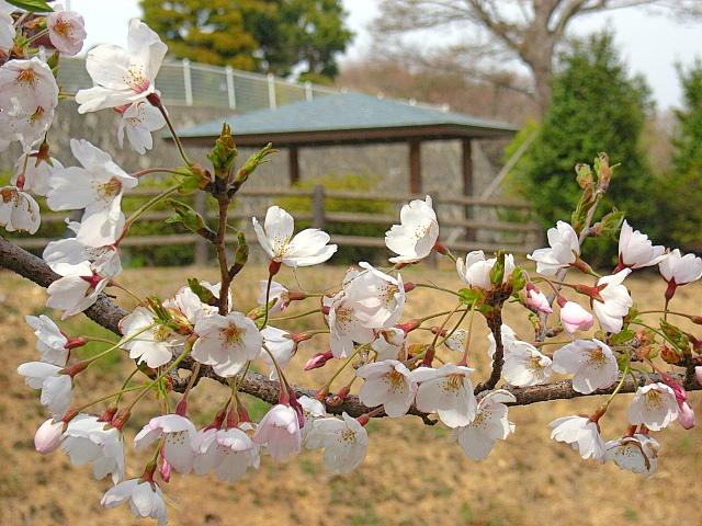 2006-Spring113.jpg