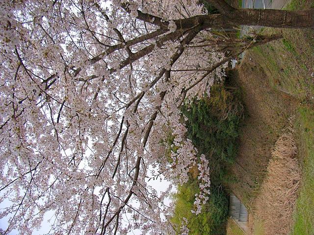 2006-Spring115.jpg