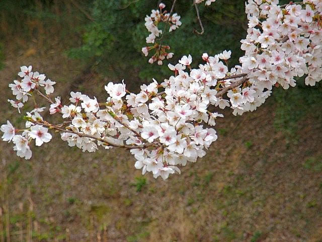 2006-Spring116.jpg