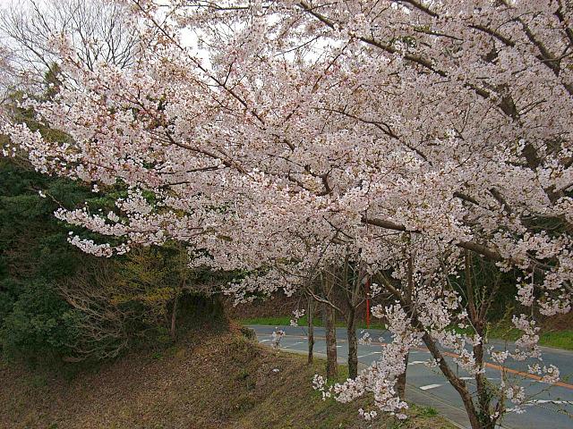 2006-Spring117.jpg