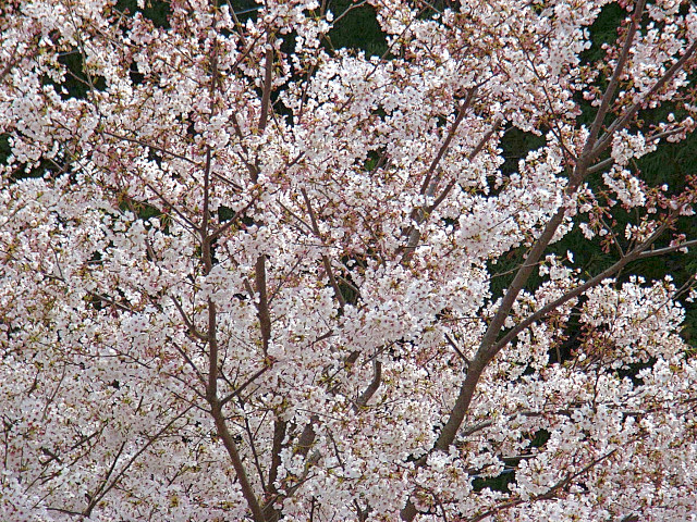 2006-Spring118.jpg