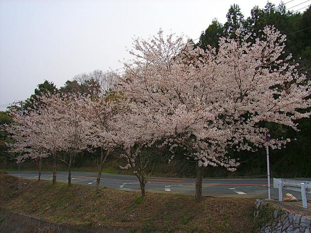 2006-Spring119.jpg