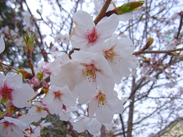 2006-Spring120.jpg