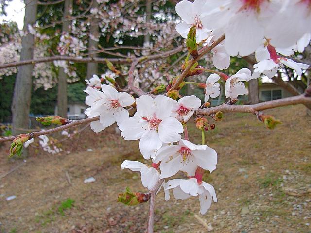2006-Spring121.jpg