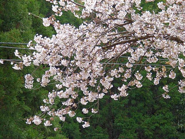 2006-Spring122.jpg
