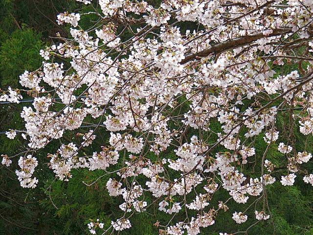 2006-Spring123.jpg