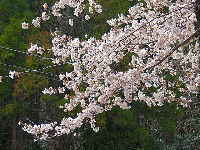 2006-Spring124.jpg