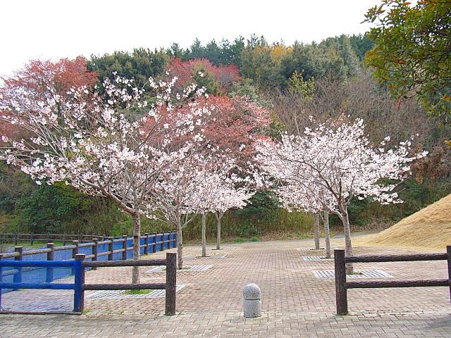 2006-Spring126.jpg