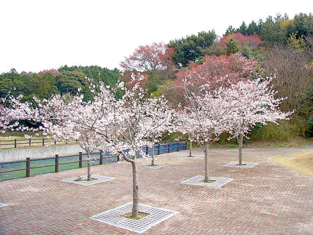 2006-Spring127.jpg