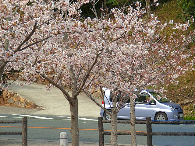 2006-Spring129.jpg