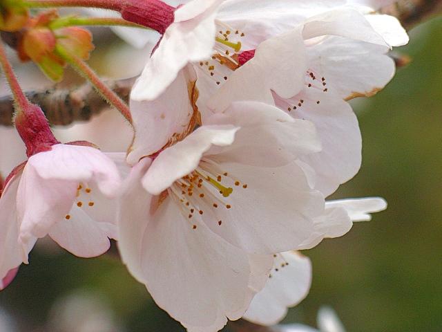 2006-Spring130.jpg