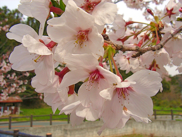 2006-Spring131.jpg