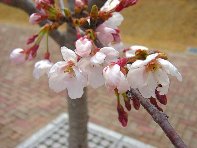 2006-Spring132.jpg