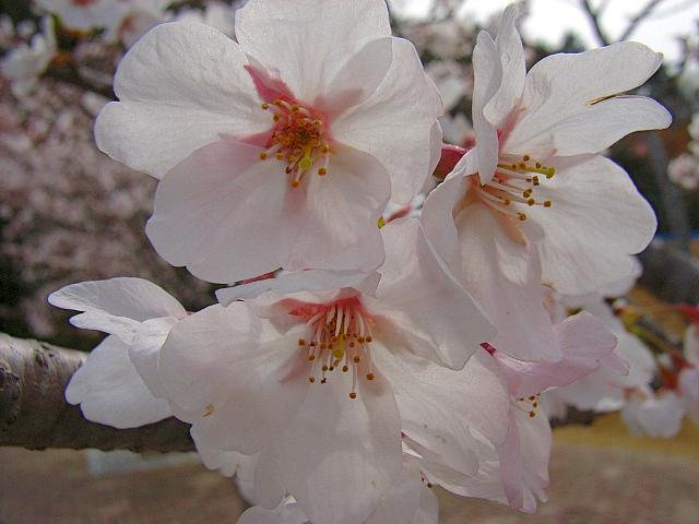 2006-Spring133.jpg
