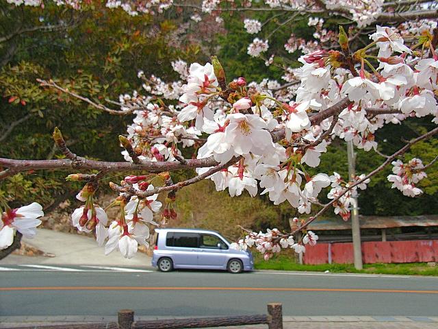 2006-Spring134.jpg