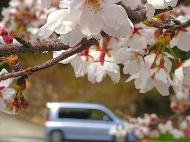 2006-Spring135.jpg
