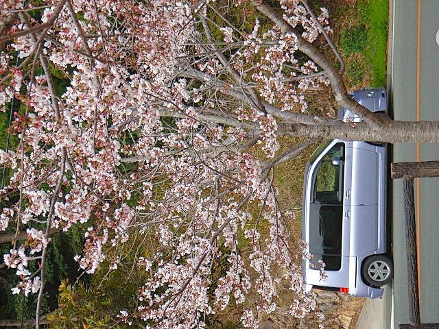 2006-Spring136.jpg