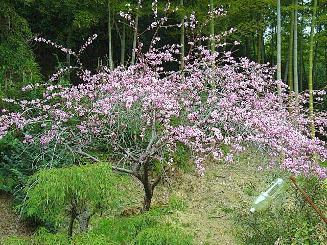 2006-Spring137.jpg