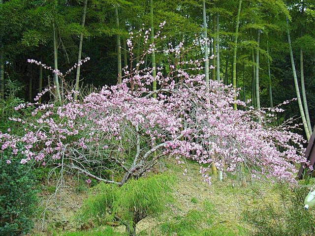 2006-Spring138.jpg