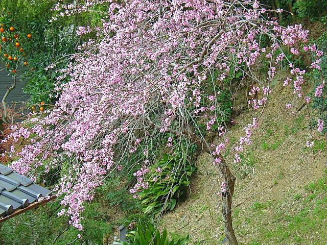 2006-Spring139.jpg
