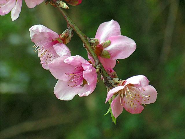 2006-Spring140.jpg