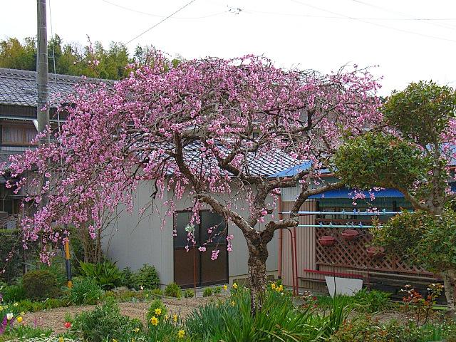 2006-Spring141.jpg
