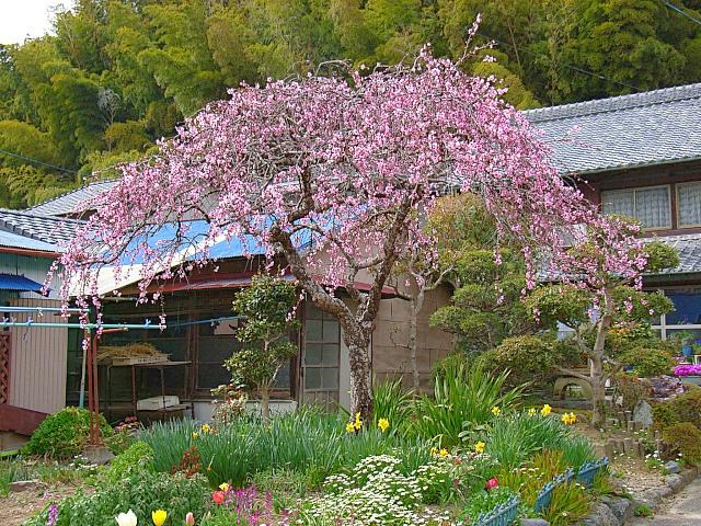2006-Spring142.jpg
