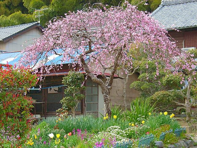 2006-Spring143.jpg