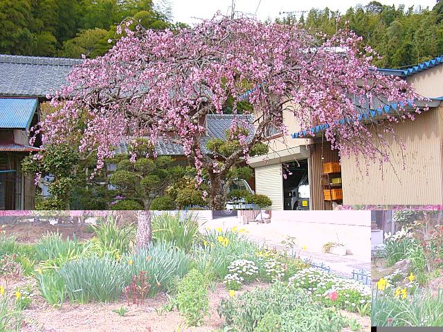 2006-Spring144.jpg