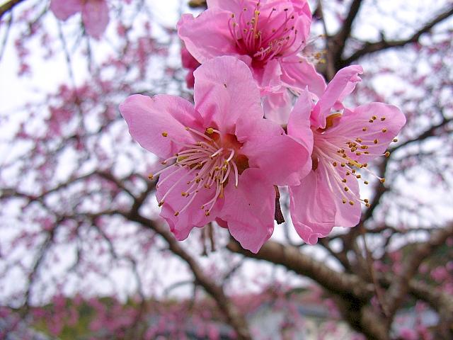 2006-Spring145.jpg