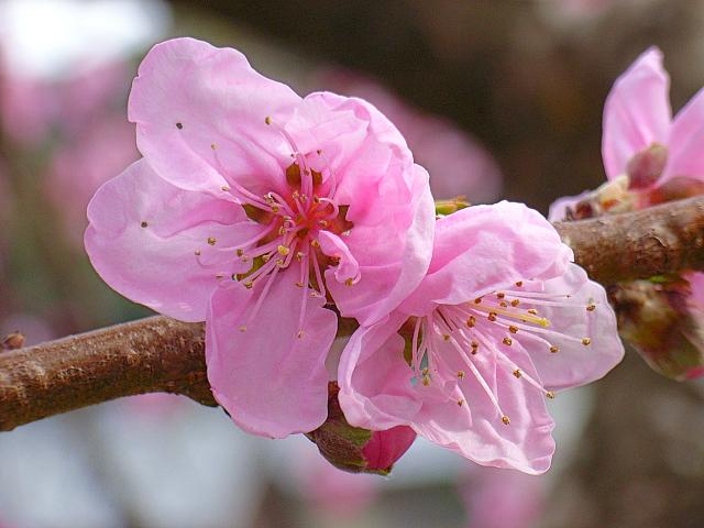 2006-Spring146.jpg