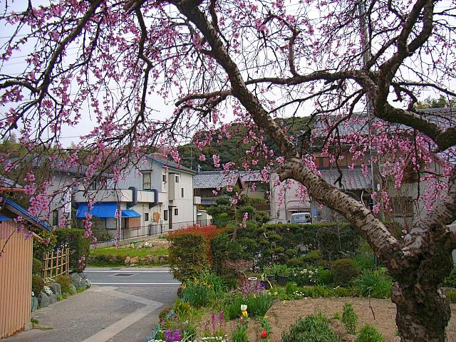 2006-Spring147.jpg