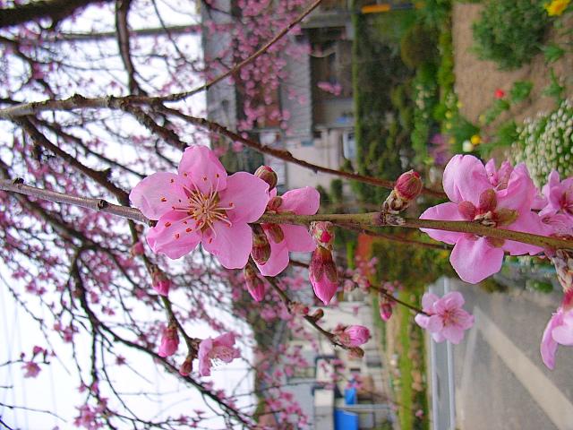 2006-Spring148.jpg
