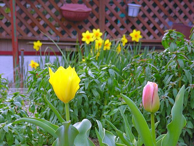 2006-Spring149.jpg