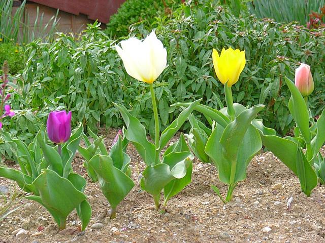 2006-Spring150.jpg